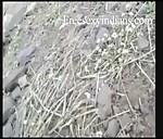 Image Desi sex videos of dehali village girl outddor sex with neighbor